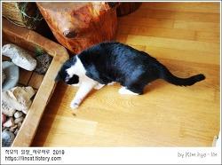 [적묘의 고양이]15살 할묘니가 흥분하는 이유, 벌레아님,개다래나무 열매 하나