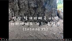 [영상]안양 왕개미제국 43편-지하세계로 가는 나무밑 출입구(2020.06.22)