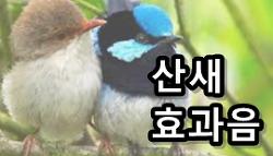 산새 소리 배경/효과음 MP3 다운로드