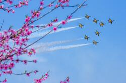 [AOA.] 항공기 + 꽃 시리즈