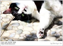 [적묘의 고양이]16살 고양이,할묘니의 캣닙타임,가을추수,가을햇살에 딩굴딩굴