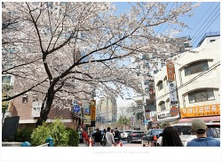 송파나루역 송리단길 맛집에서 식사하고 석촌호수 벚꽃즐기기