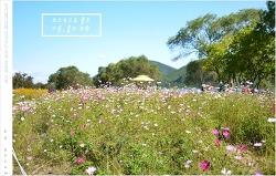 코스모스 피어있는 길목 - 물의 정원②