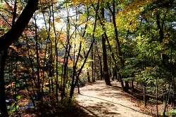 [걷기좋은길]가을에 다시 찾은 오대산 선재길