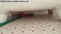 고양이 배변훈련 : 희한한 화장실 버릇 (서서 볼일보는 고양이들)