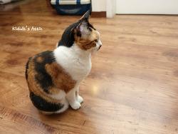 집 지키는 방범 고양이
