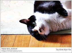 [적묘의 고양이]16살고양이,가을햇살,할묘니,노묘의 딩굴딩굴,가을은 깊어가고,등짝동물