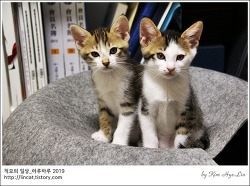 [적묘의 고양이]4월 5일생,아기고양이,태비냥,이지와 마리,캣초딩들,입양하세요,집사급구,입양홍보