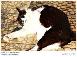 [적묘의 고양이]16살고양이,10월햇살,녹아내리는 할묘니,노묘의 딩굴딩굴,붉은 산수유열매,박새,동박새