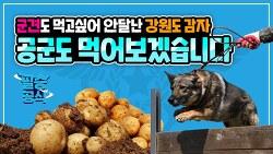 요즘 핫한 강원도 감자 공군이 챙겨갑니다~! [필승공식] 3월 4주차 소식입니다!