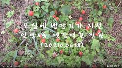 [20200619]안양 도심 옛검역원 정원에 뱀딸기가 지천