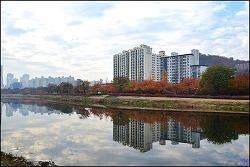 신천 동로편 걷기 ①  산격대교~도청교