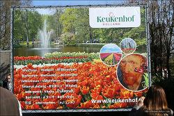 """<네덜란드>세계적인 꽃 축제 """"쾨켄호프(Keukenhof)"""