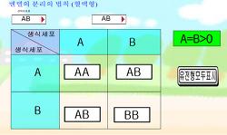 ABO 혈액형 유전 가상실험