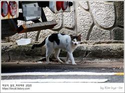 [적묘의고양이]동네고양이,길냥이,백수의 하루, 폭염 속 고양이들,여름방학