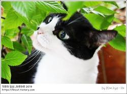 [적묘의 고양이]15살 묘르신,할묘니,깜찍양, 고양이 화분 키우기