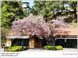 [적묘의 부산]꽃이 가득,봄날데이트코스,강추,숲속북카페,부산시민공원,왕벚꽃,흐드러진 꽃나무 아래