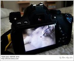 [적묘의 고양이]친구님네 짤뱅이,먼치킨,고양이의 변명, 안잔다고오,주말 고양이(+동영상)