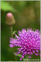 충남 서천 국립생태원에서 만난 꽃들