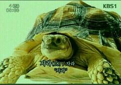 한국여성의전화 2018 1/4분기 문자후원 후기