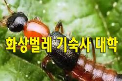화상벌레 기숙사 대학