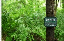 길동생태공원에서의 우중산책下