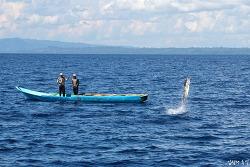 인도네시아 참치 낚시, 배도 침몰시킨 녹새치의 최후
