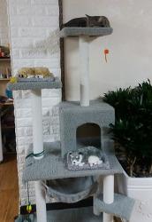 잠자는 강아지 고양이 공기정화 소품