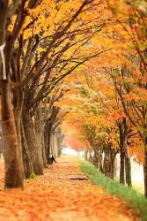 춘천 공지천의 가을, '마음에도 단풍이 듭니다!'