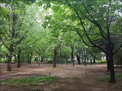 발밤발밤 52 - 도산공원