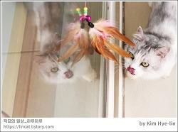 [적묘의 고양이]6살 발랄한 먼치킨,짤뱅군,고양이 발바닥에 땀날까,월간낚시 파닥파닥,아침갬성,친구네고양이