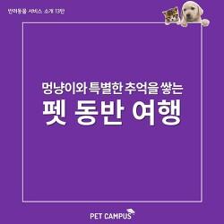 [펫캠퍼스] 멍냥이와 특별한 추억을 쌓을 수 있는, 반려동물 동반 여행