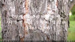 [영상]안양 왕개미제국 41편-나무 꼭대기에 무엇이 있길래(2020.06.19)