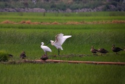 Guided Birding Tours for transit passengers in Incheon airport
