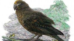 거대 앵무새 화석 발견 헤라클레스 앵무새 길이 1M