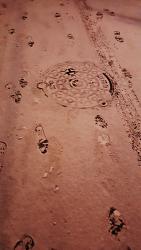 오늘 하얀 눈밭의 흔적