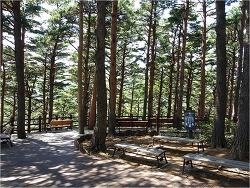 200704 - 대관령 소나무 숲 ②