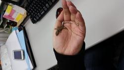 야성의 그녀, 맨손으로 귀여워한 정체는?