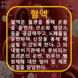 혈액 증상 필요영양소 - 빈혈,출혈성질환