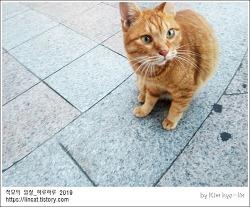 [적묘의 고양이]부산대 골목 길냥이, 자라고양이,노랑둥이,TNR의 좋은 예,동네고양이