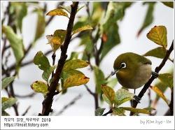 [적묘의 정원]버드와칭,박새와 동박새, 참새과 친구들,겨울 정원 단골손님