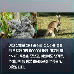 JOINUS KOREA prays for Australia  (호주 산불 피해로부터 속히 회복되길 기원합니다.)