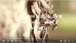 [영상]안양 왕개미제국 30편-한여름에도바빠요(2019.08.16)