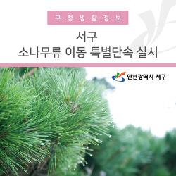 인천 서구, 소나무류 이동 특별단속 실시