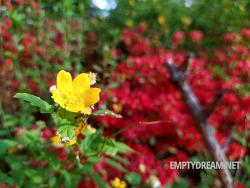 다양한 꽃과 식물을 무료로 보며 산책하기 좋은 홍릉숲 홍릉수목원