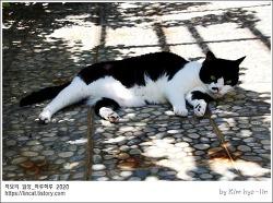 [적묘의 고양이]16살고양이,8월폭염,녹아내리는 할묘니,노묘, 옥상정원,뜨거운 여름,코로나시국