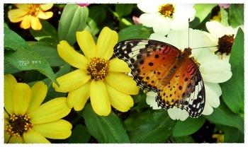 상춘객을 부르는 날개짓~! 함평 나비 축제