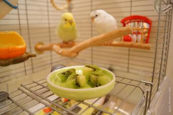 키위라는 과일