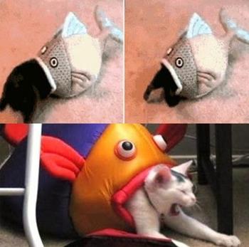 고양이 잡아먹는 물고기 등장...