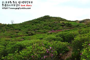 [5월 봄꽃여행지] 합천으로 황매산철쭉제에 가다!
